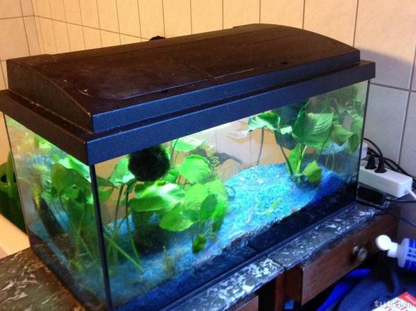aquarium 54 liter komplett in mauren fl fische. Black Bedroom Furniture Sets. Home Design Ideas