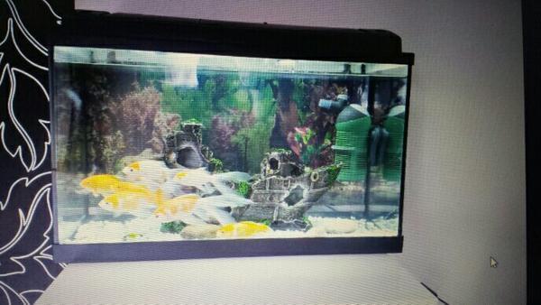 aquaristik in ludwigshafen am rhein kaufen bei deinetierwelt. Black Bedroom Furniture Sets. Home Design Ideas