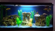 Aquarium Buntbarschaquarium 180L (