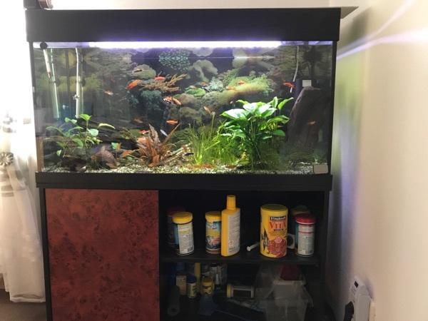 Aquarium live gebraucht kaufen nur 4 st bis 70 g nstiger for Aquarium gebraucht