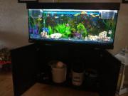Aquarium mit Hochglanz