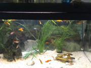 Aquarium - Wasserpflanzen
