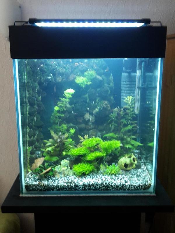 aquarium w rfel nano cube 120 liter m lavastein r ckwand in kaarst fische aquaristik kaufen. Black Bedroom Furniture Sets. Home Design Ideas