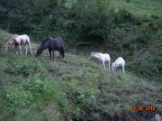Biete Pferdeweide auf