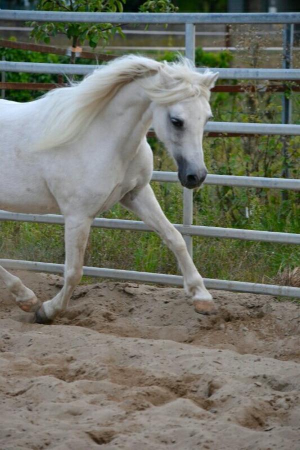 pflegebeteiligung pony kleinanzeigen kaufen verkaufen. Black Bedroom Furniture Sets. Home Design Ideas