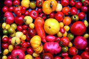 Biete Tomatensetzlinge aller