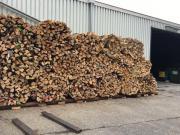 Brennholz / Buche oder