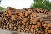 Brennholz Feuerholz BUCHE/