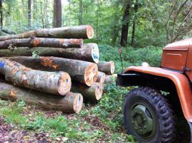 Brennholz Kaminholz - Buche und Eiche: Kleinanzeigen aus Bad Wimpfen Allmend - Rubrik Holz