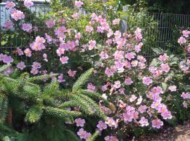 Eine wunderbare Zierde für jeden: Kleinanzeigen aus Hirschaid - Rubrik Pflanzen