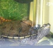 Emma die Wasserschildkröte