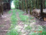 Feuerholz / Kaminholz / Brennholz