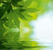 Fototapete Blätter Wasser