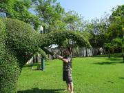 Gartenarbeiten Raum Heidelberg -