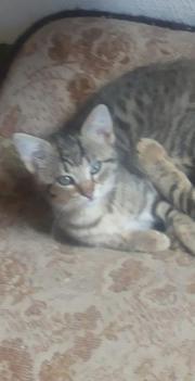 Jungkatzen suchen neues