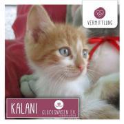 Kalani sucht ihr