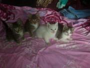 Katzen Babys suchen