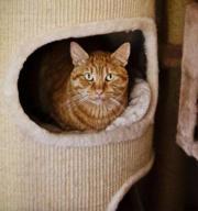 Katzenpärchen: Victoria & Perry
