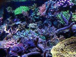 Bild 4 - Meerwasseraquaristik Besuchen Sie unseren Onlineshop - Eckental