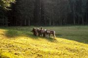 Naturoase-Pferdestall