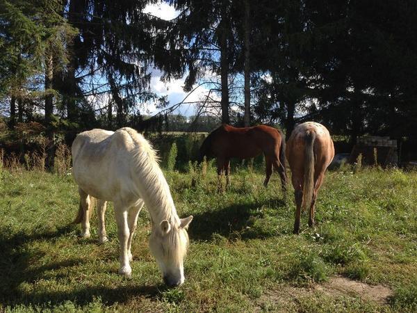 boxen offenstall weidepl tze pferde in nackenheim bei deinetierwelt. Black Bedroom Furniture Sets. Home Design Ideas