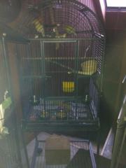 Papagei Käfig + weitere