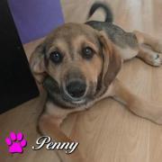 Penny - kleine Maus