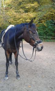 Pferd/Pony teilen
