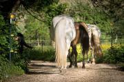 Pferde - Paddock Trail Offenstall Platz
