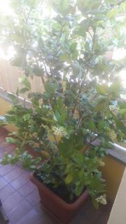 Pflanzen zu verschenken
