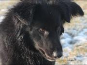 RENE - fröhlicher kontaktfreudiger Familienhund