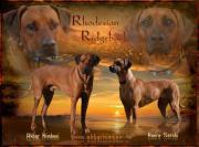 Rhodesian Ridgeback Welpen
