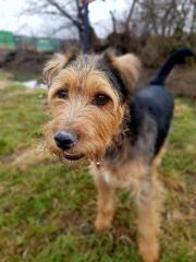 SAMKO, Terrier Mischling -