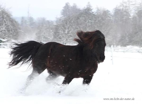 sch ne tierfotos von ihrem pferd in karlsruhe pferde kaufen und verkaufen ber private. Black Bedroom Furniture Sets. Home Design Ideas