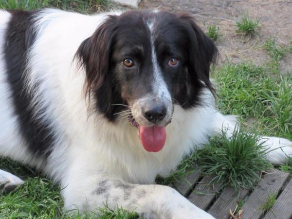 Spot sucht liebevolle » Hunde