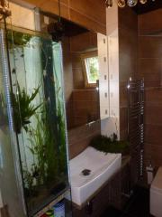 suche für Aquarium Pflanzen und