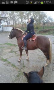SUCHE Pferd zur