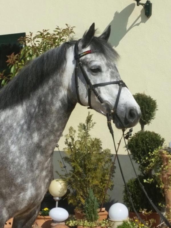 Atemberaubend Pferdefarbbilder Bilder - Beispiel Wiederaufnahme ...