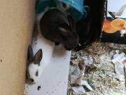 Süße Kaninchen Babys