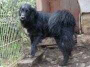 TIERSCHUTZ LAYLA Einzelhund sucht kinderlose