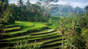Urlaub auf Bali?