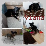 Viana ca. 9