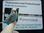 Vogelbörse am 15.