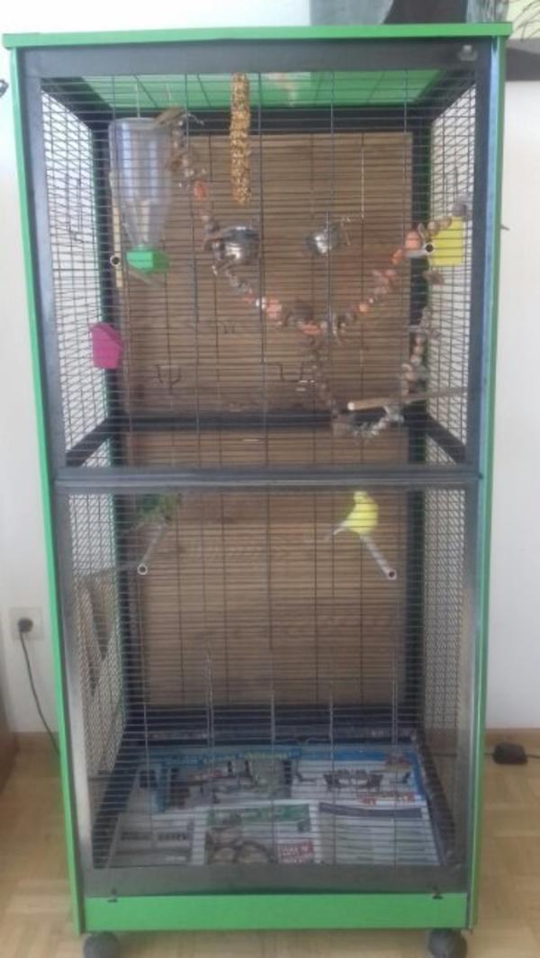 vogelk fig in dornbirn v gel kaufen und verkaufen ber private kleinanzeigen. Black Bedroom Furniture Sets. Home Design Ideas