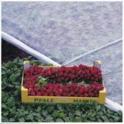Winterschutzvlies Pflanzenschutz Thermovlies