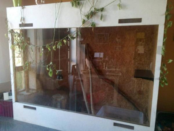 xxl terrarium wie neu bei neuruppin fehrbellin opr brandenburg gr ner leguan in l chfeld. Black Bedroom Furniture Sets. Home Design Ideas