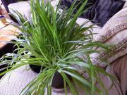 Zimmerpflanzen,diverse